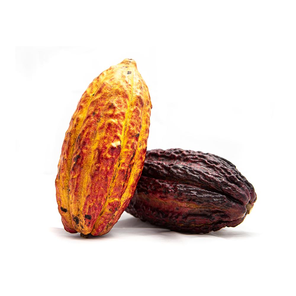 Kakaové ovocie EQUADOR 1ks
